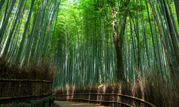 Bamboo Forest Road